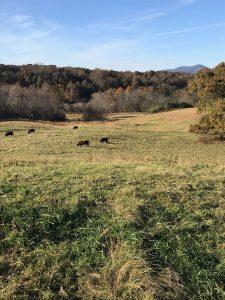 Thistlehill Farm Pastures
