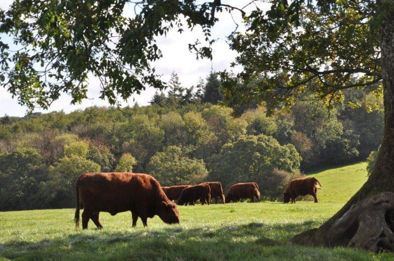 Essington Park 136