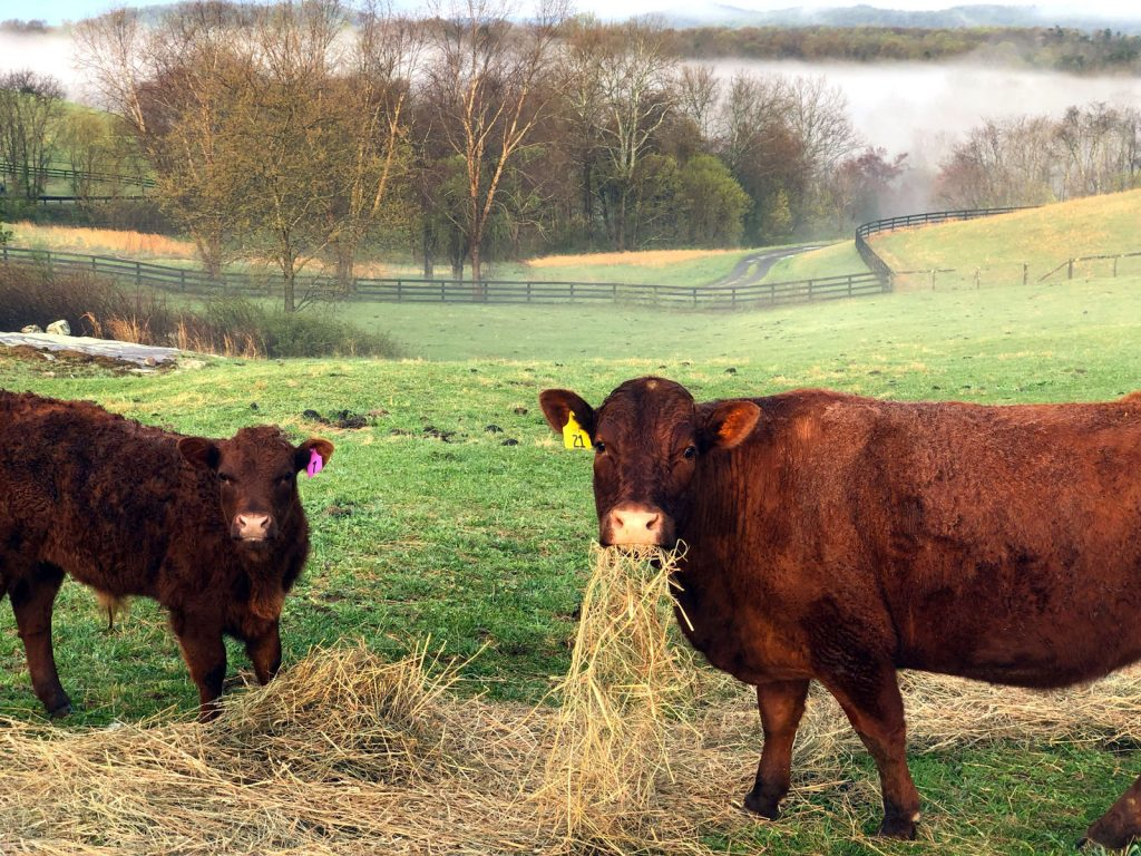 Thistle Hill Farm sacrifice pasture
