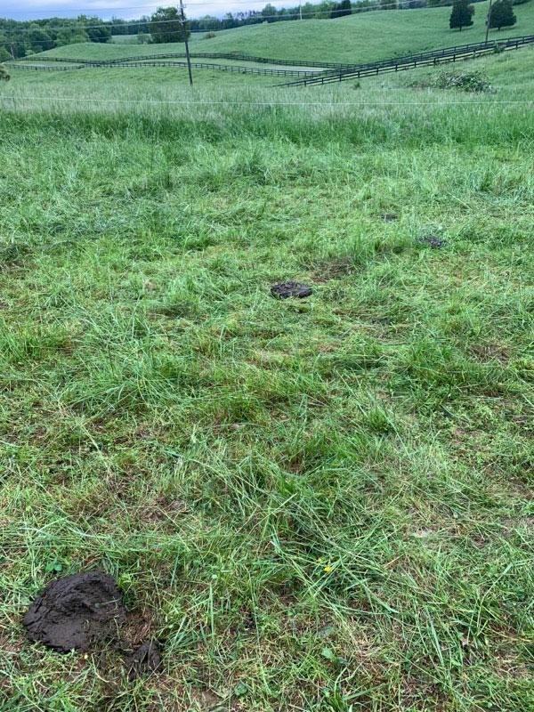 Thistlehill Farm Grass