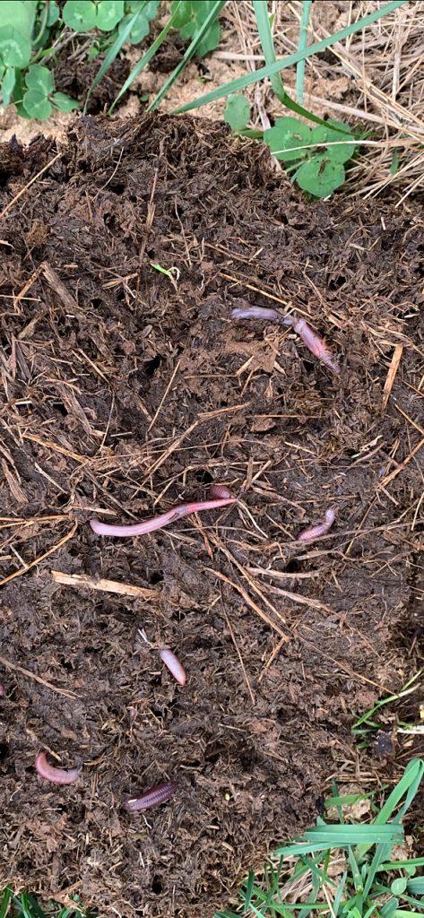 Thistlehill Farm Dirt