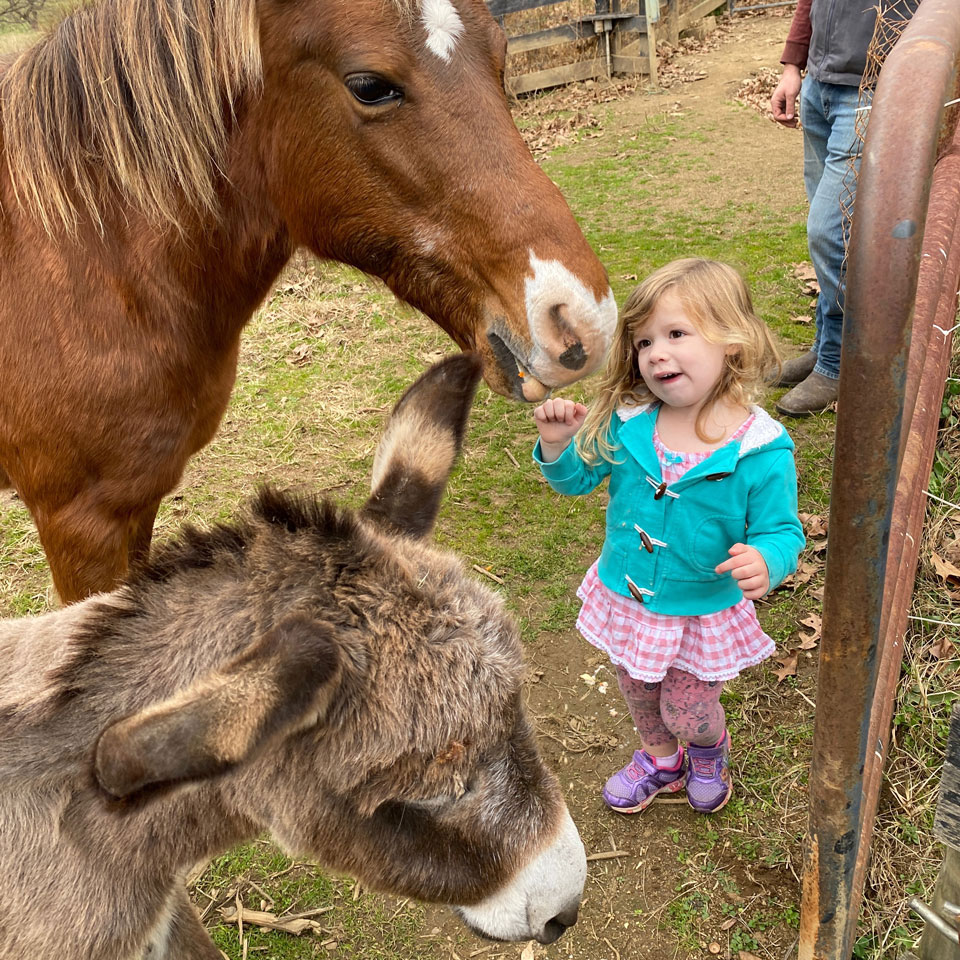 Tillie with horse and donkey