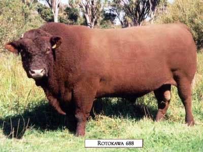 Rotokawa 688